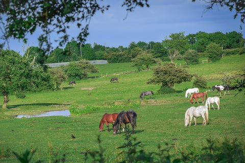Building A Horse Farm Or Buying - A Comparison