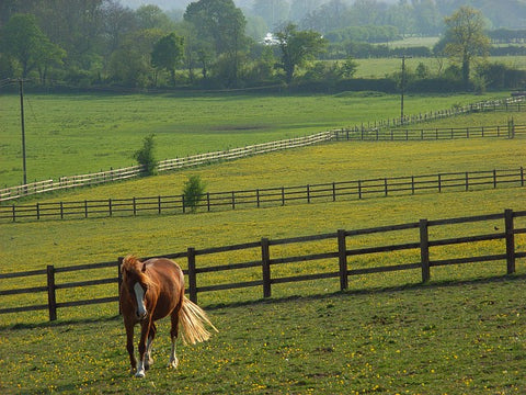 Choosing The Right Horse Paddock Fencing