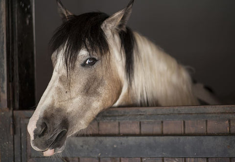 how to prepare your horse stables for winter