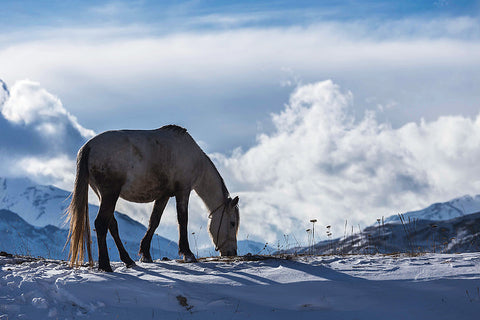 how to enjoy horse riding in winter