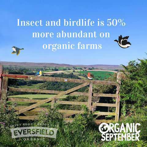 Insect and birdlife is 50% more abundant on organic farms
