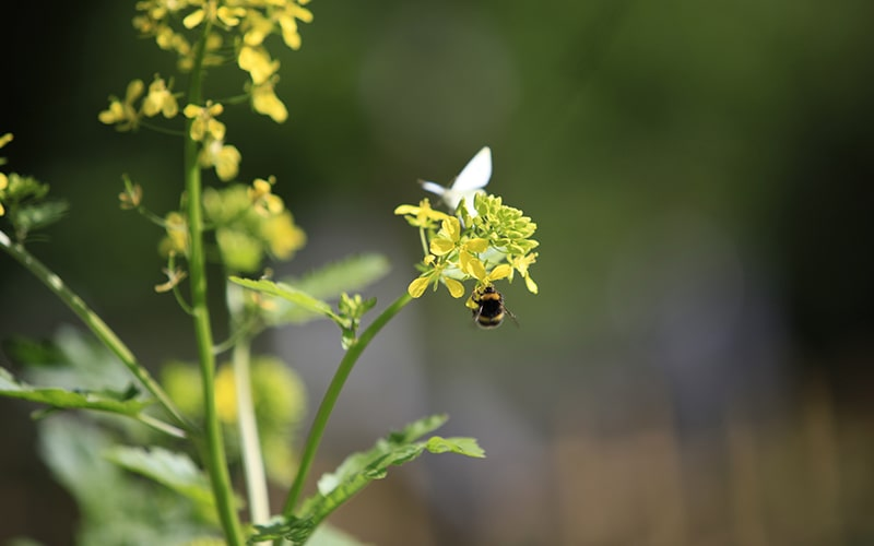 save bees by shopping organic food from Eversfield Organic