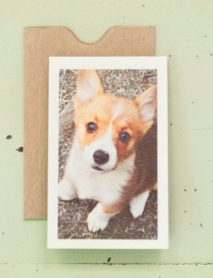 Corgi Enclosure - Wynwood Letterpress
