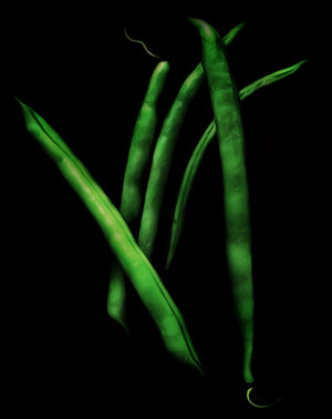 Load image into Gallery viewer, Greenest Beans