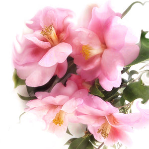 Load image into Gallery viewer, Pink Camellia Dream