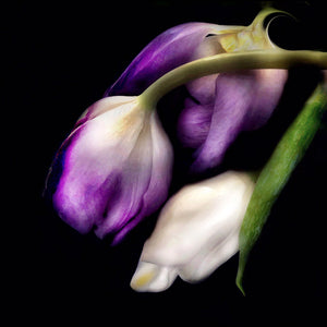 Load image into Gallery viewer, Trois Tulips
