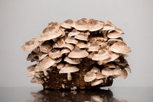 Load image into Gallery viewer, Fresh Mushrooms