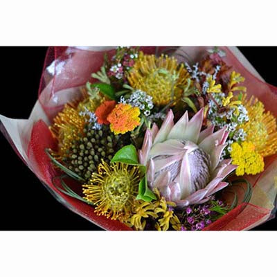 Australian native flowers king protea pinpushions