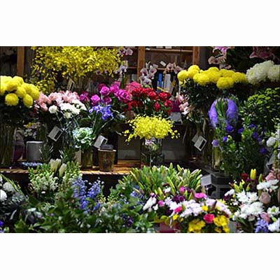 Flower Shop bright colorful flowers