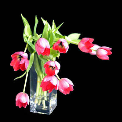 Open red tulips vase