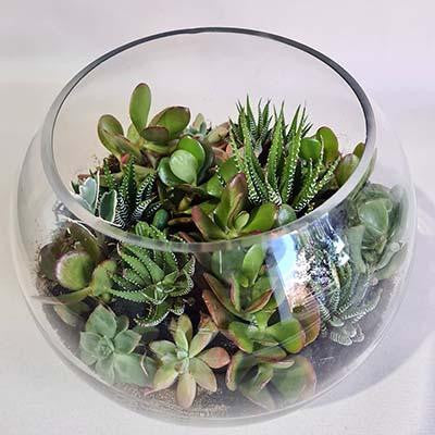 Succulents plants terrarium glass fish bowl small