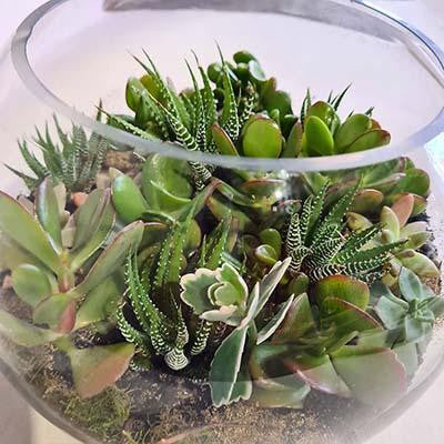 Succulents terrarium glass fishbowl