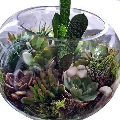Succulents plants terrarium glass fish bowl