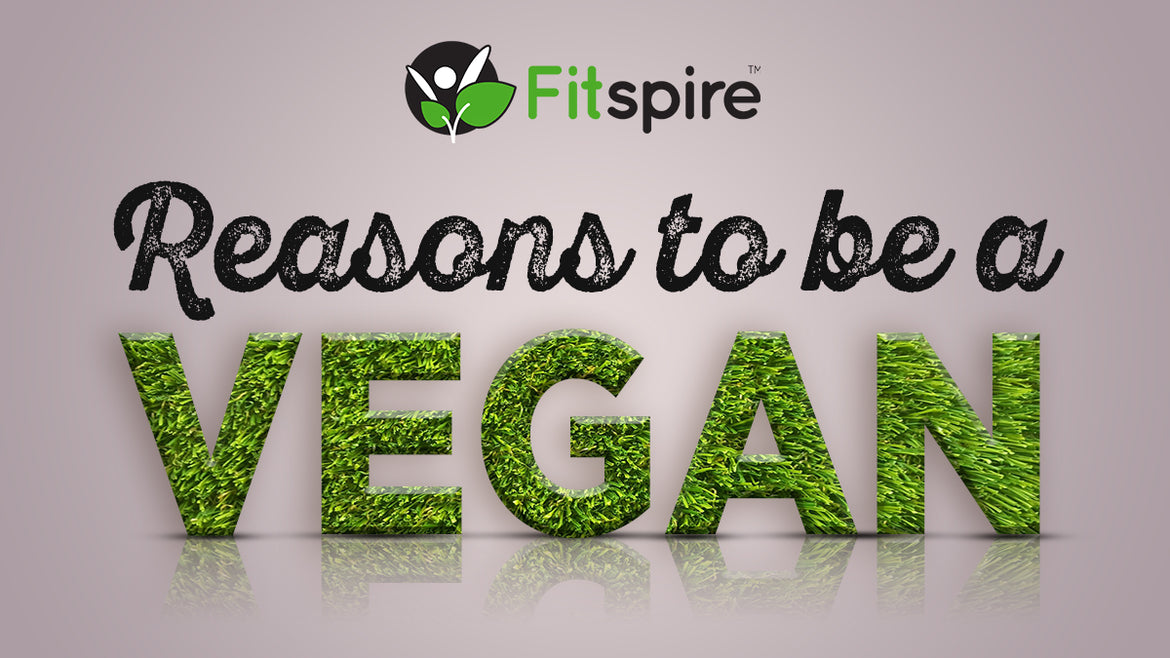 REASONS TO BE A VEGAN