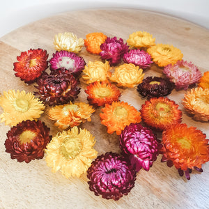 Dried paperdaisys