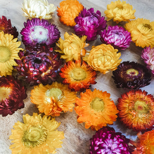 Colourful dried paper daisys