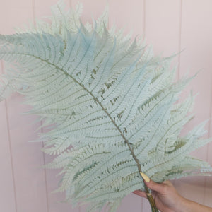 Large Preserved Fern