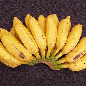 Banana Latundan / Saging