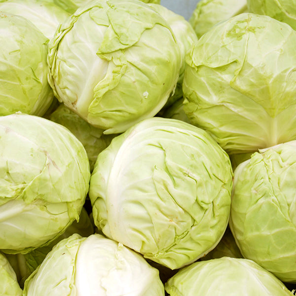 Cabbage/ Repolyo