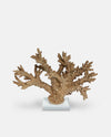Staghorn Gold Coral Sculpture
