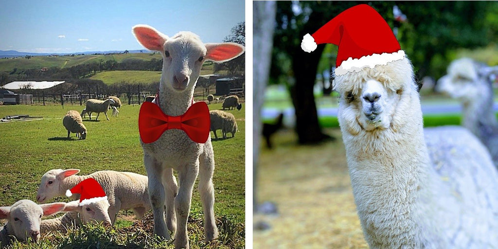 We Wish EWE a Merry Christmas!