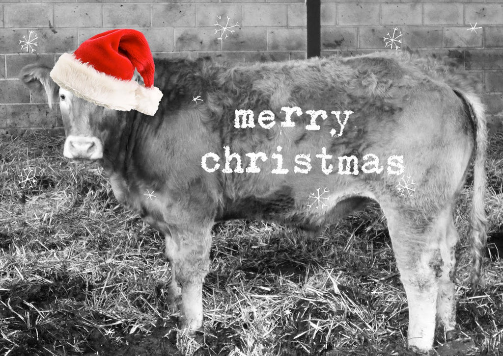 Wishing you the Mooiest of Holiday's...