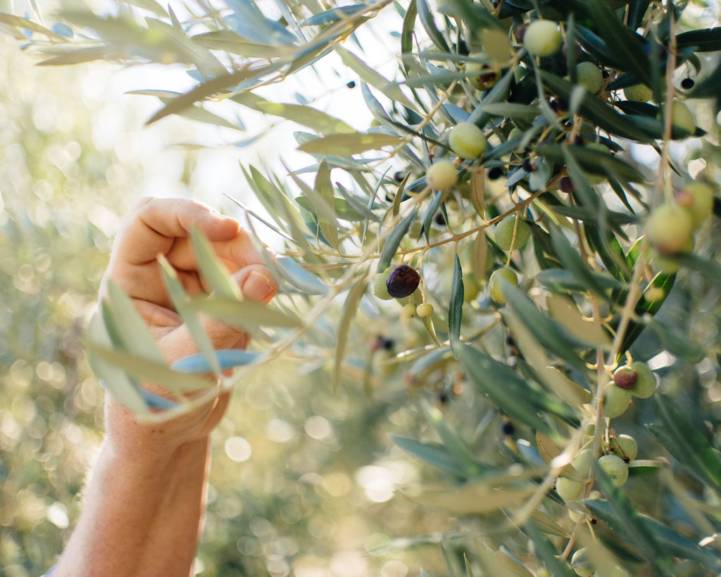 Nature's Neighbor Radio Show:  All About Olives on the Central Coast with Kiler Ridge, Olea Farm & The Groves on 41
