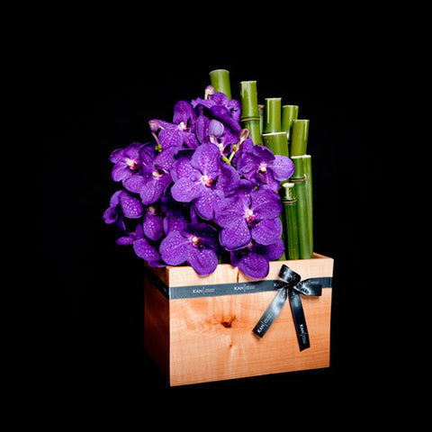 Amazing Vanda Orchids in a Custom Container