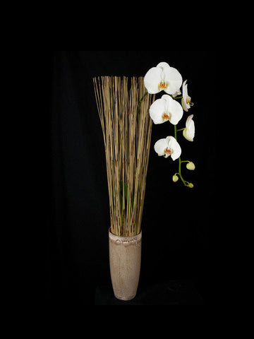 Single Phalaenopsis Orchid in a Natural Display