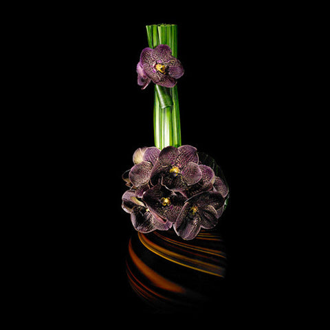 Chocolate Brown Vanda Blossoms in an Art Glass Container