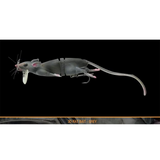 Savage Gear 3D RAD RAT LURE (BIG) - REDTACKLE