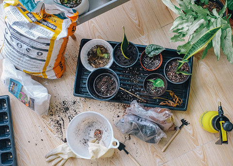 what equipment do you need when repotting plants