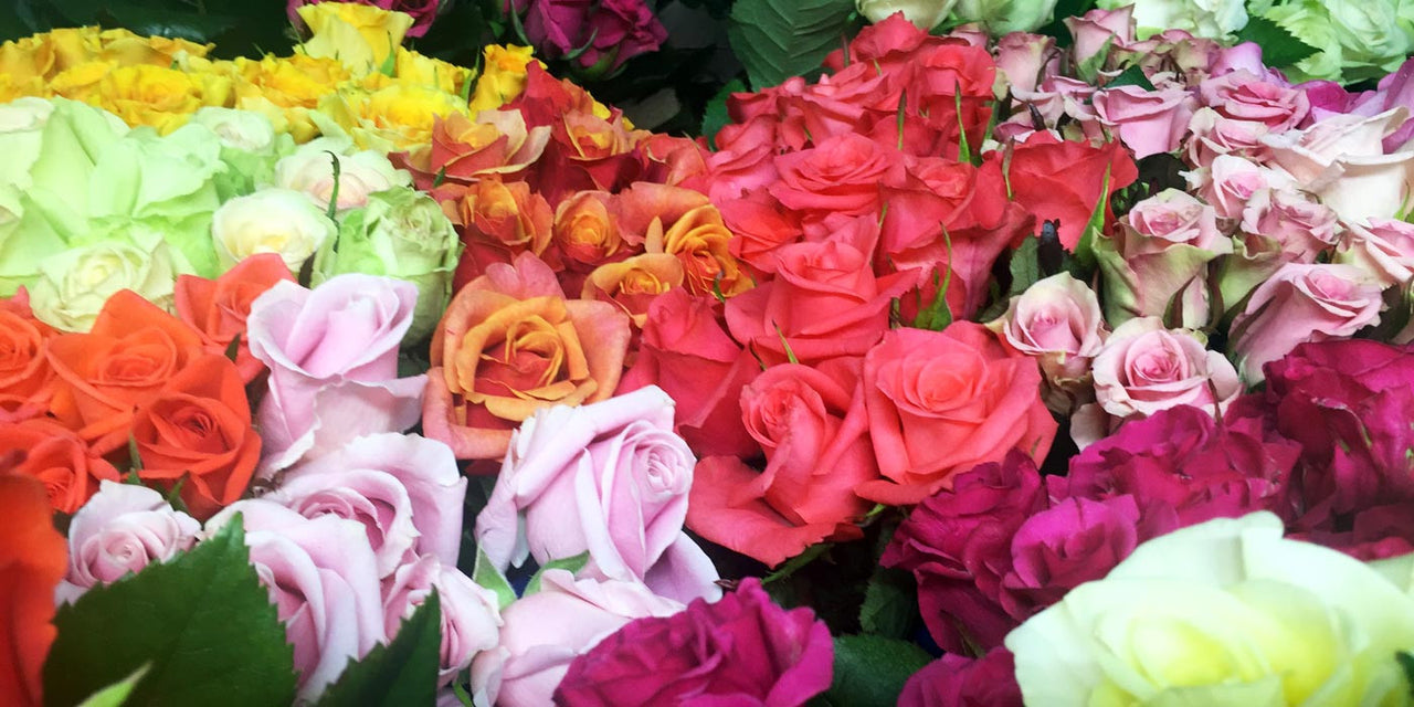 Buy flowers online great value for money direct from the grower rose gallery izmirmasajfo