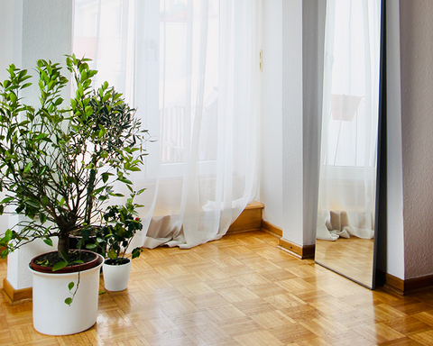 how much light do house plants need in the winter?
