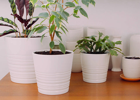 best tips for repotting rootbound plants