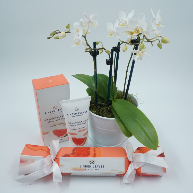 Mini Phalaenopsis Orchid with gift pack