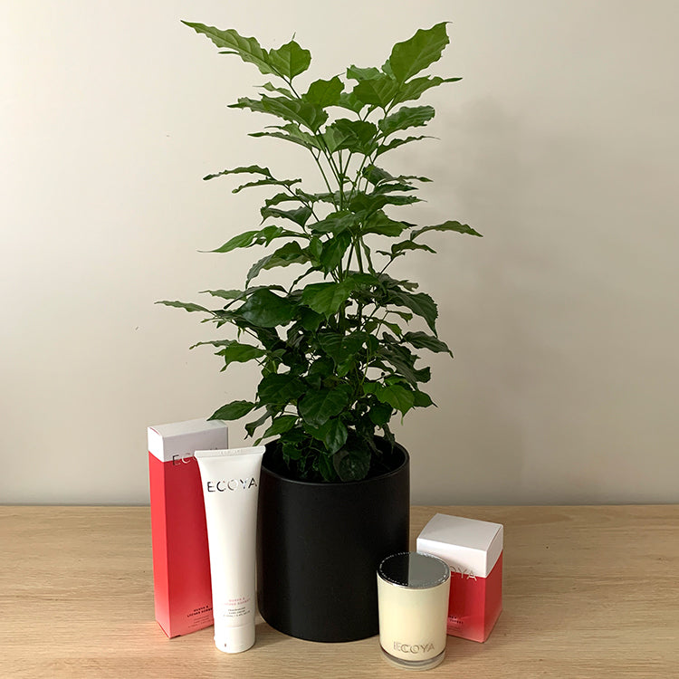 China Doll House Plant Gift Bundle NZ