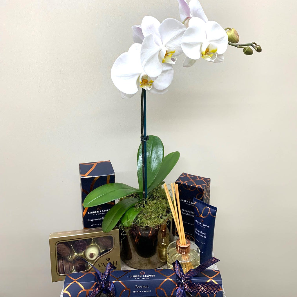 Phalaenopsis Orchid Gift Bag #6