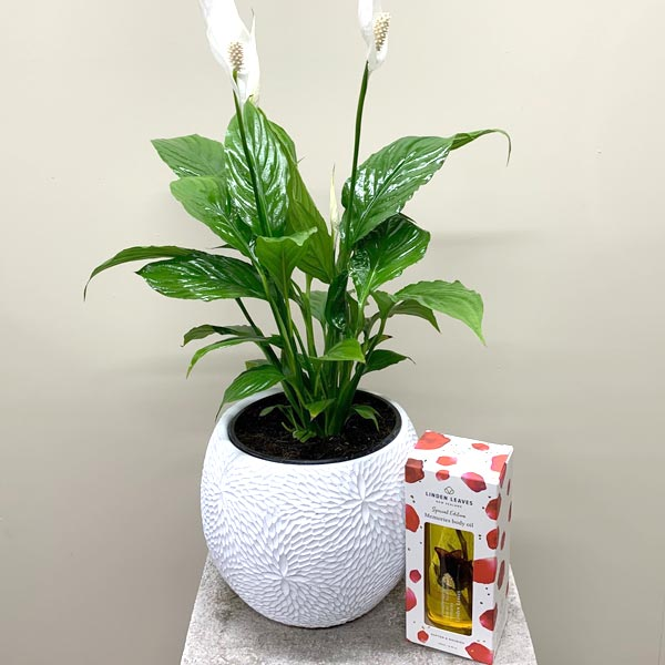 Peace Lily with Textured Pot + Fragrant Linden Leaves Oil