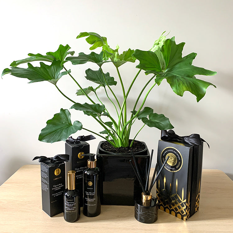 Philodendron Hope House Plant Gift Bundle