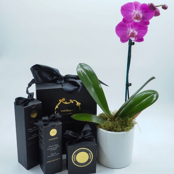 Purple Phalaenopsis Orchid with Surmanti Gift Set