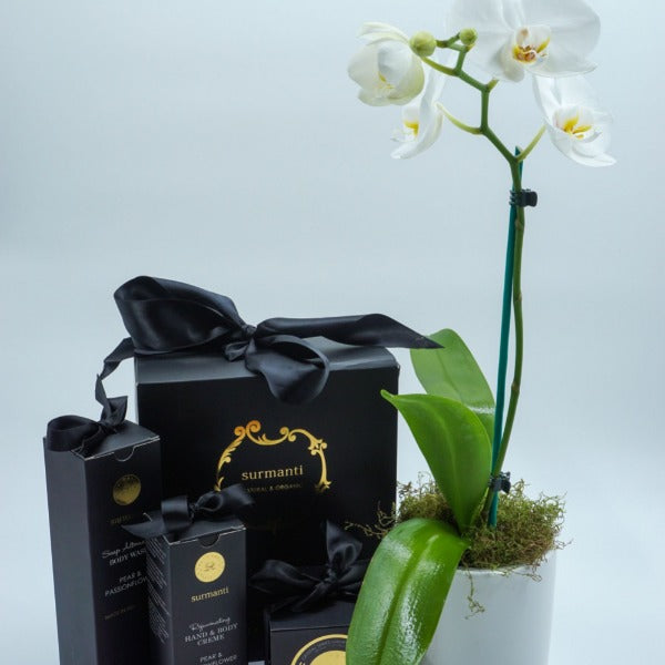 White Phalaenopsis Orchid with Surmanti Gift Set