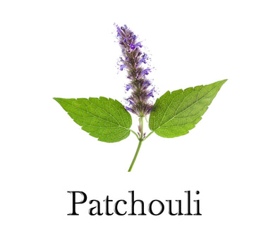 Patchouli Essential Oil 100% Pure 10ml - SCENTA