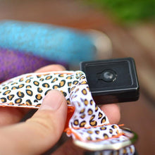 Load image into Gallery viewer, Dozpets Led Pet Collar