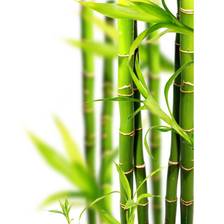 Silica (from bamboo stem extract)