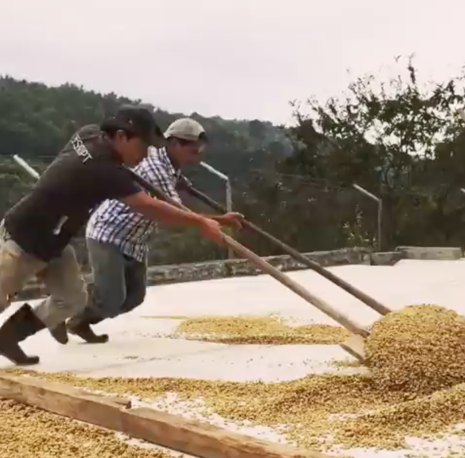 Santa Felisa | Guatemala | Honey Process