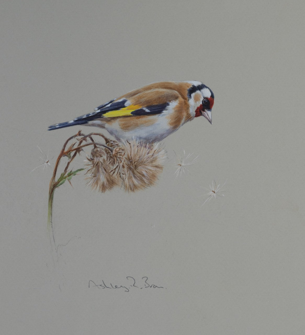 'Goldfinch & Thistledown' - Original watercolour by Ashley Boon - 8.75 x 8""