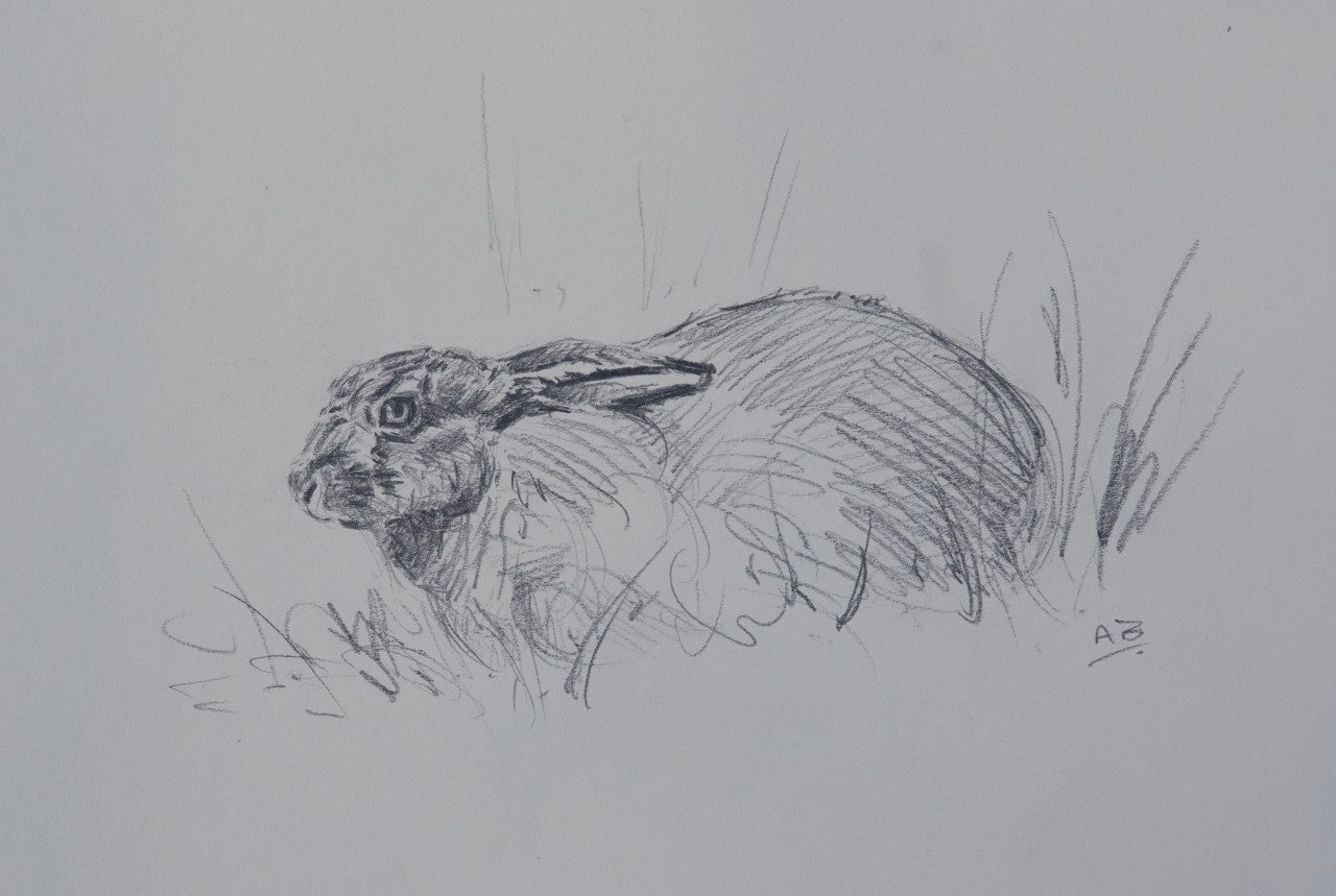 'Brown Hare' - Original pencil sketch by Ashley Boon - 6.5 x 9""