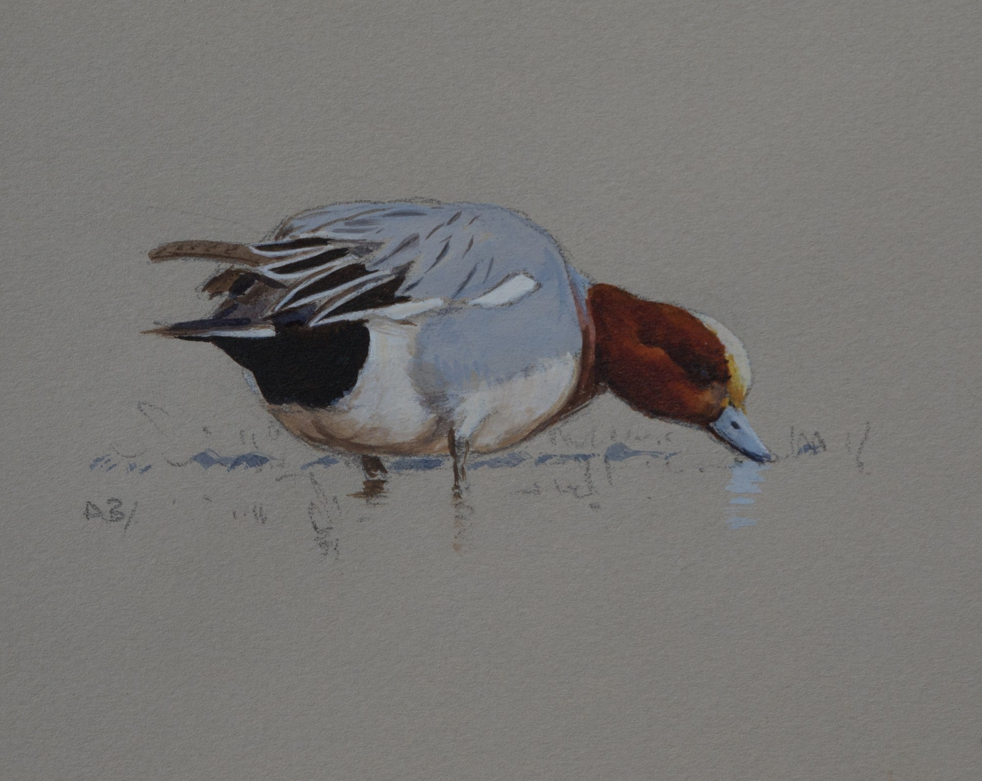 "'Drake Wigeon Sketch' Original watercolour by Ashley Boon - 4.75"" x 6"""