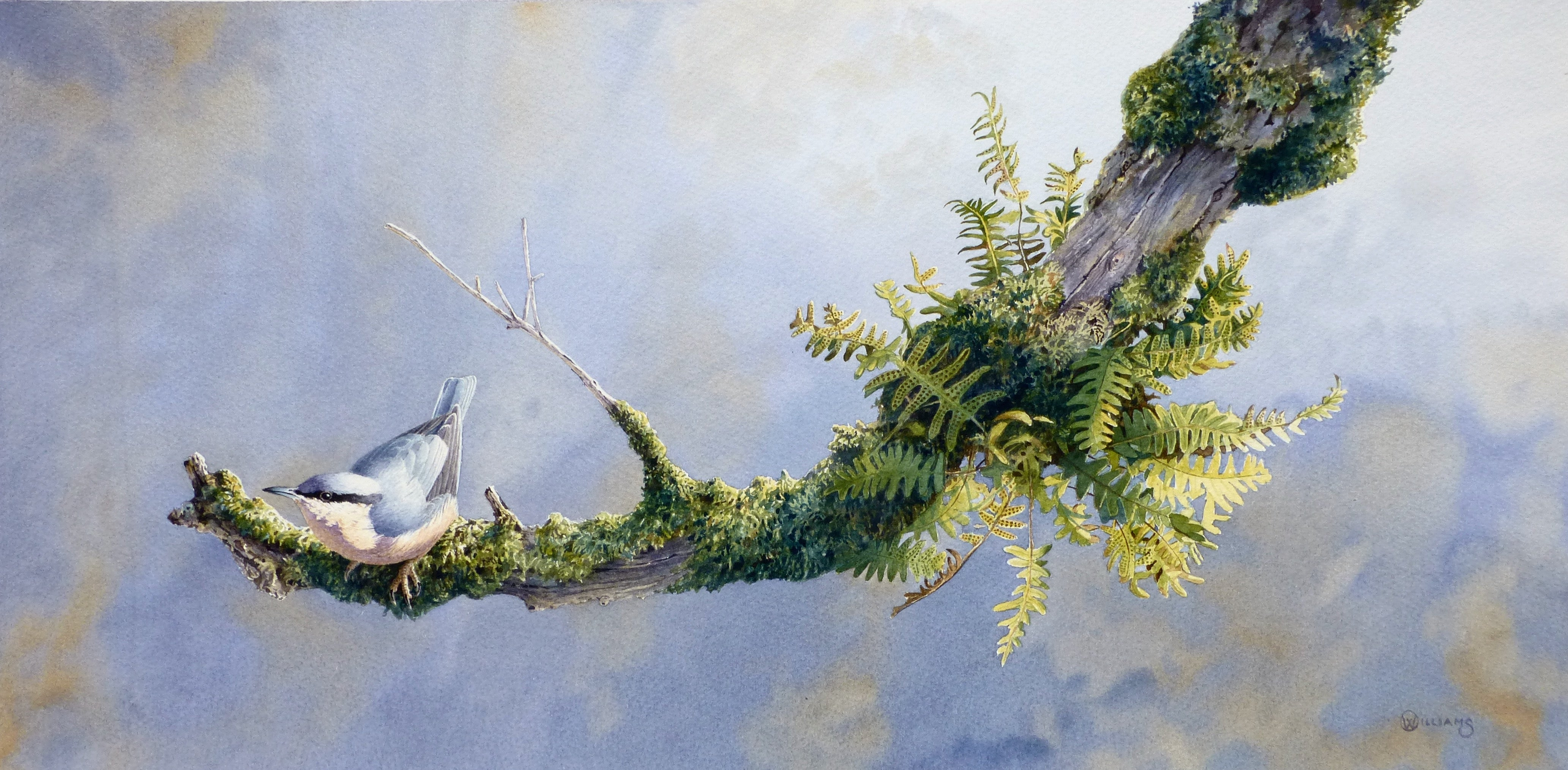 'Nuthatch on Elder' - Original Watercolour Painting by Owen Williams - 27 x 55cm